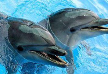 Delfinario nel parco Sormovo Nizhny Novgorod: descrizione, indirizzo, recensioni