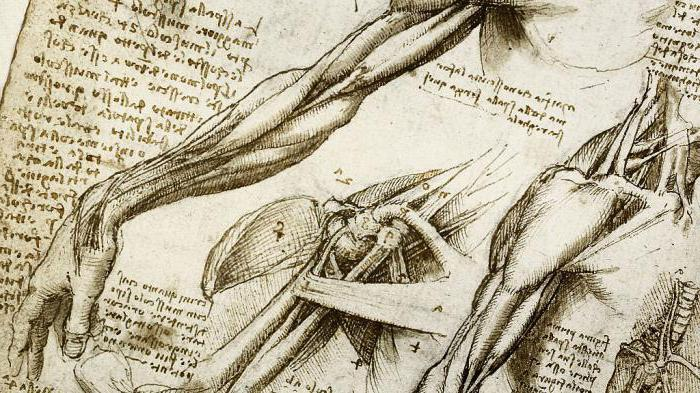Contribución al desarrollo de la anatomía Leonardo da Vinci ...