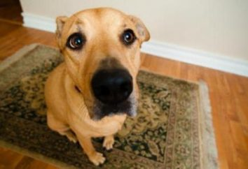Pies z oddawaniem moczu często: przyczyny i leczenie
