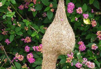 Idées cadeaux: comment faire un nid avec leurs mains?