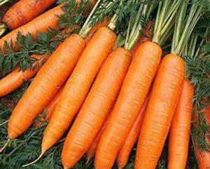 Carote Abaco: caratteristiche, la coltivazione, la cura recensioni