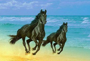 Koń, maksymalna prędkość. Rejestry Statystyki