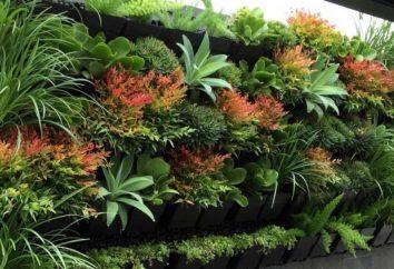Ciekawym rozwiązaniem: jak uprawiać ogród pionowy