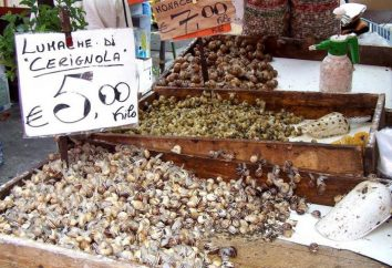 raisin escargot: élevage, les conditions de détention. ferme escargot