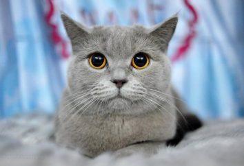 domowy kot: najważniejszym elementem komfortu i domowego ciepła