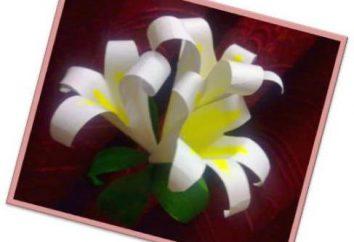 Jak zrobić lilię z papieru: Krok klasie mistrzowskiej