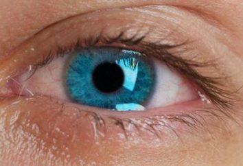 Dlaczego ludzie mają oczy?