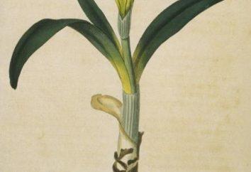 perenes bulbosas. Flores, plantas perenes para o jardim