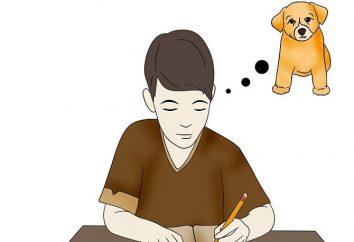 Porady dla dzieci: jak przekonać rodziców, aby dostać psa