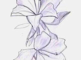 Jak narysować storczyk? Reprezentujemy uosobienie prostoty i wyrafinowania