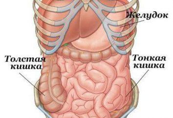 Como verificar o intestino delgado? métodos de diagnóstico. Preparando para uma colonoscopia
