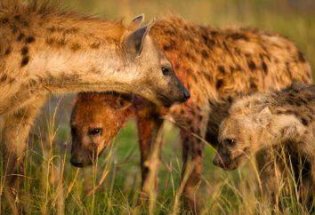 organi sessuali di animali. riproduzione animale. Le più grandi e gli animali più piccoli
