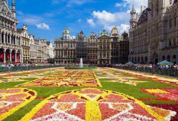 Który warzywa są nazwane po stolicy Belgii?