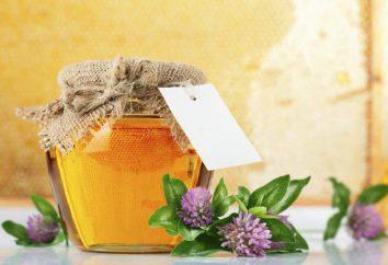 Koniczyny miodu: Użyteczne właściwości oraz skład produktu