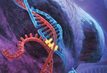 Méthode d'investigation génétique moléculaire