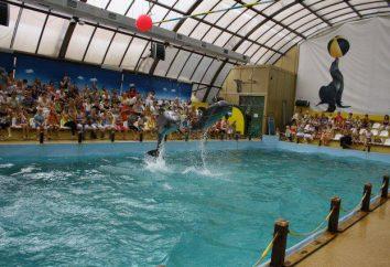 Delphinarium in Rostov-on-Don: Beschreibung, Foto