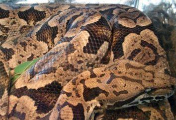 Le système digestif des reptiles: caractéristiques structurelles et fonctionnement