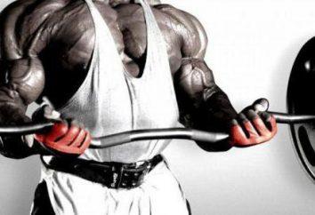 I migliori esercizi per i muscoli pettorali: una panoramica, descrizione e l'efficacia