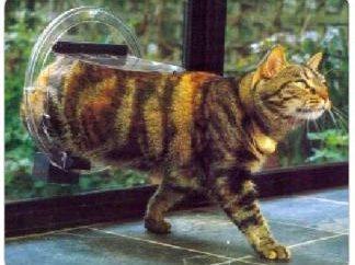 Tür für Katzen – eine notwendige und sinnvolles Zubehör