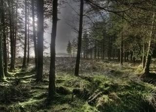 Deforestation – Waldfragen. Deforestation – Umweltproblem. Wald – die Lungen des Planeten