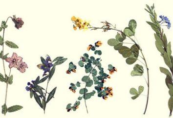 Herbarium: como fazer coleção caseira de plantas