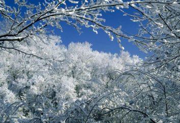 Frost – niesamowite zjawisko