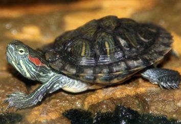 Reptiles: los nombres de los animales con fotos