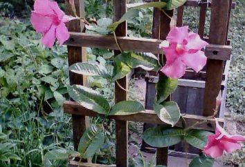 Tapestry do wspinaczki roślin z własnymi rękami. Obsługuje wspinaczkę na róże i winogrona