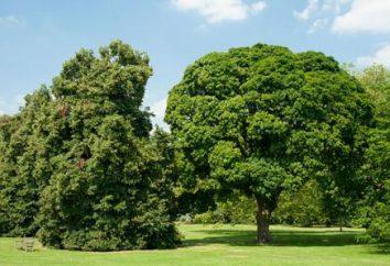 Jardins botaniques royaux de Kew à Londres