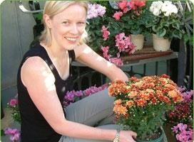 Crisantemi: la coltivazione di fiori e la cura del sole