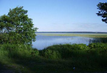 Lac Otradnoye: description, la flore et la faune caractéristiques