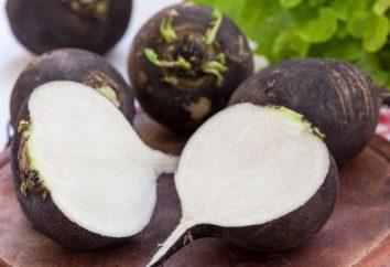 Czarny sok rzodkiewka: gotowanie, wskazania i przeciwwskazania. Czarna rzodkiew: korzyści i szkody