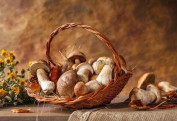 condizioni di crescita e la raccolta di funghi calendario. A che temperatura a crescere i funghi in autunno?
