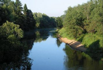 Dubna (rivière): rafting, pêche, plages. Dubna