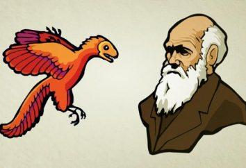 Qual è la natura dell'evoluzione e se è nella comunità?