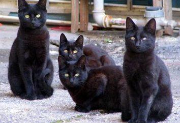 Dlaczego sen czarnych kotów – nie trudno się domyślić,
