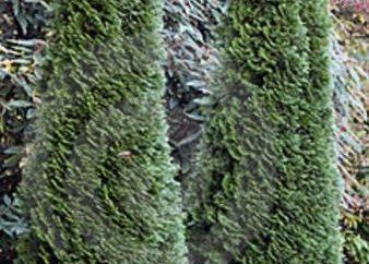 Drzewo ozdobne do ogrodu