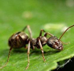 Jak pozbyć się mrówek w ogrodzie? dobra rada