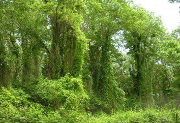 forêt Samur au Daghestan: description, de la végétation et