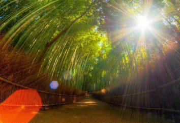 Geschirr Bambus: Eigenschaften und Anwendungsfunktionen