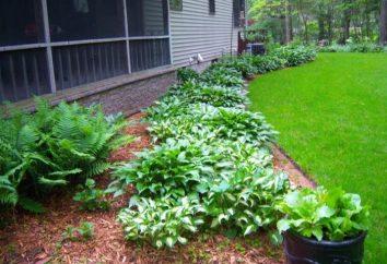 Como decorar seu jardim com suas próprias mãos