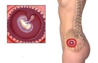 Le dimensioni della ovulo settimana: Dinamica di gravidanza