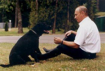 Zwierzęta szefowie Rosji. Pies Putina