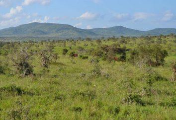 Sabanas y bosques: Características del espacio natural