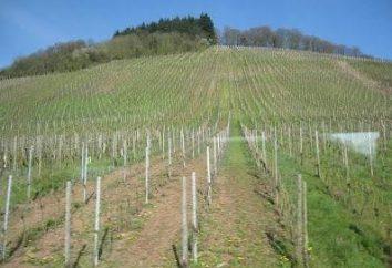 Niezawodne wsparcie dla winogron z rękami