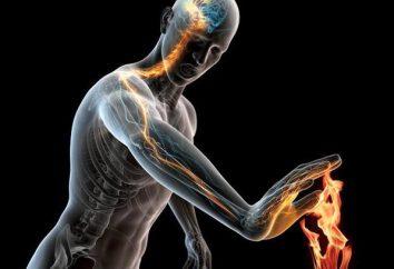 antinociceptivo sistema humano para reducir el dolor