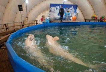 New dolphinarium. Abre em Perm Dolphinarium móvel