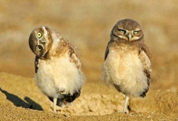 Najbardziej inteligentne ptaki. Co to jest?