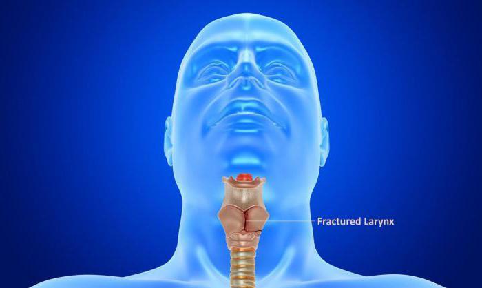 La laringe, el cartílago de la laringe. El mayor cartílago de la laringe