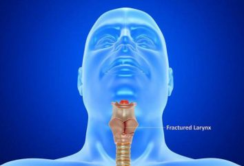 A laringe, a cartilagem da laringe. O maior cartilagem da laringe